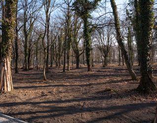 [Wrocław] Rewitalizacja Parku na Tarnogaju 368023
