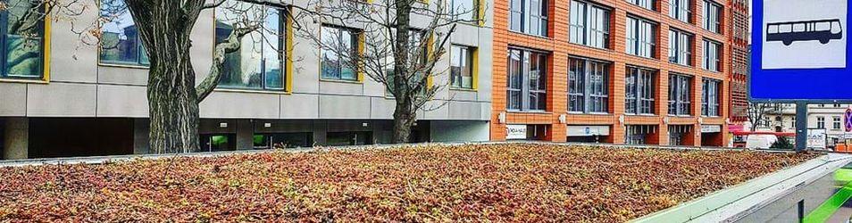 Zielone przystanki w Poznaniu  482875
