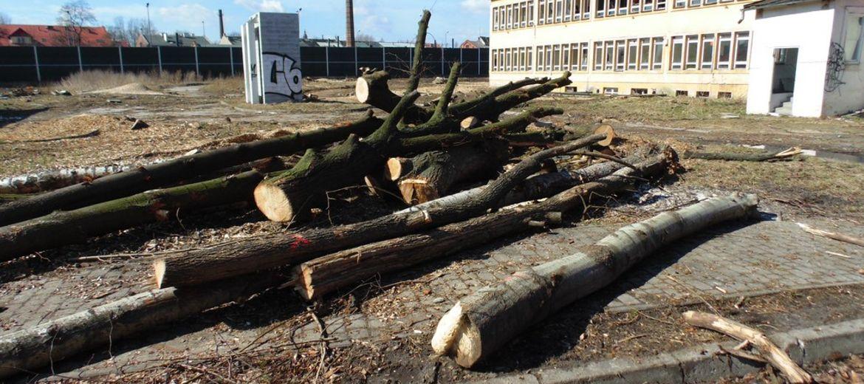 Trwa wycinka drzew pod