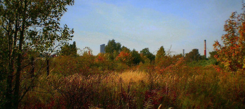 Wrocław: Mieszkańcy chcą parku