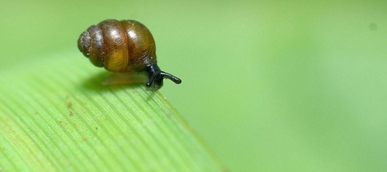 Setki tysięcy ślimaków zginą?