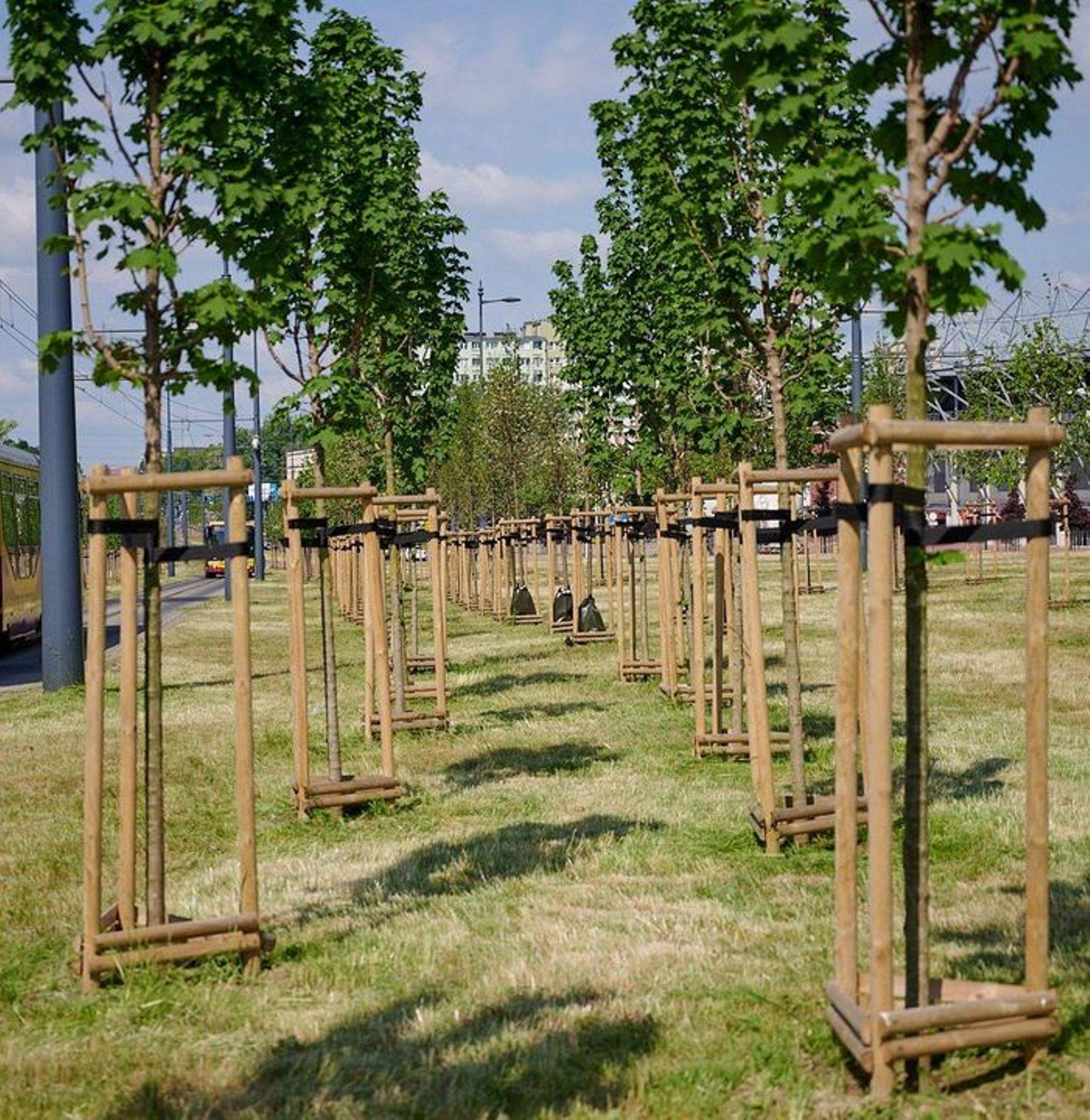 Duży projekt ekologiczny w Łodzi. Posadzą 20 tysięcy drzew