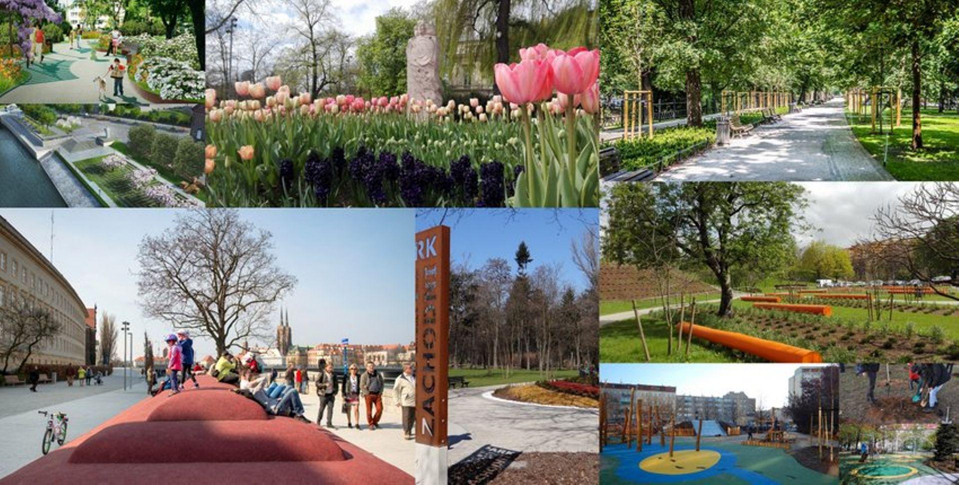 We Wrocławiu przybędzie zieleni i drzew. Miasto szykuje się do jesiennych nasadzeń